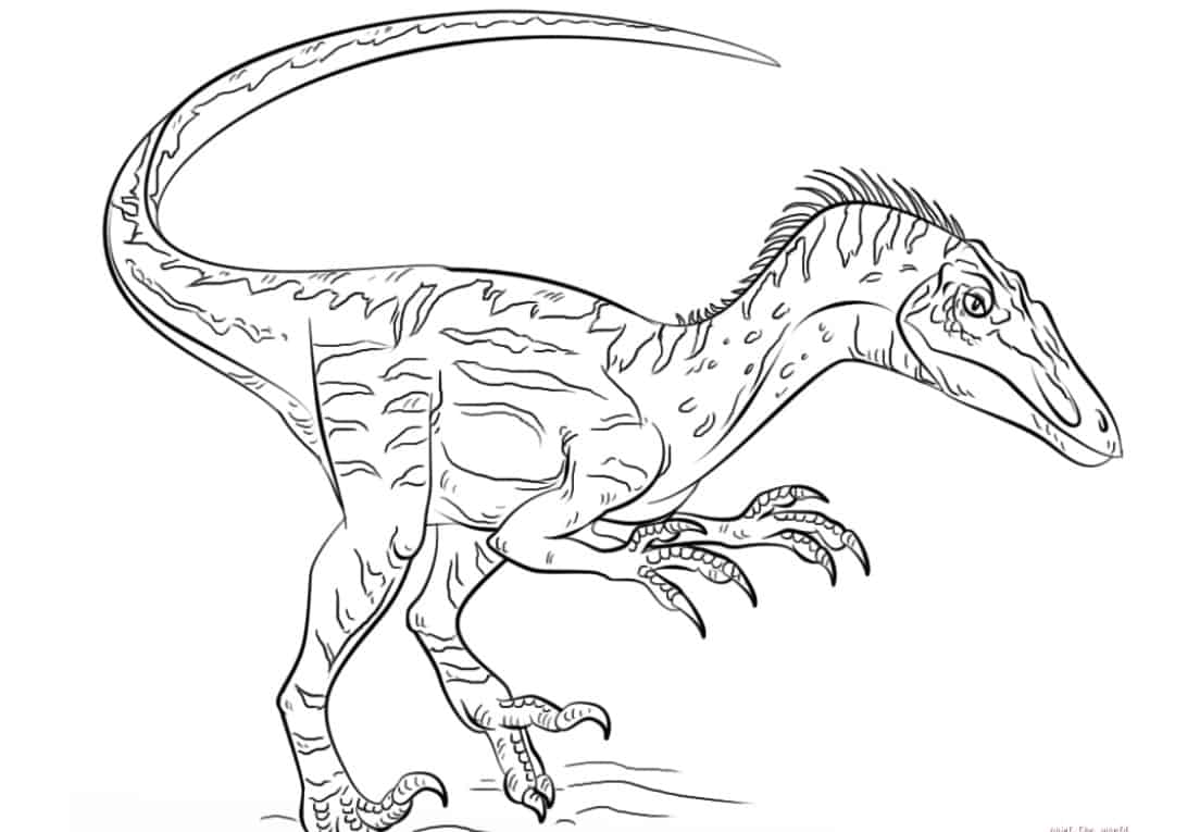 Velociraptor coloring page | Free Printable Coloring Pages