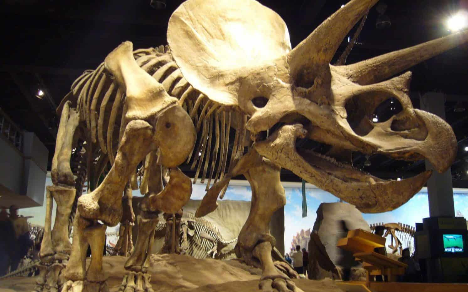 Dinosaur fun Facts - Museum skeleton display
